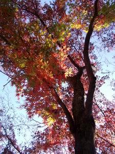 山頂の紅葉